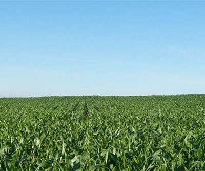 160 Acres, Clay County